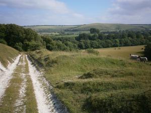 Ancient downland at Berwick St John, Wiltshire